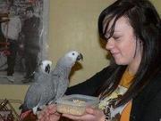 Продается попугай Жако! Цена указана без клетки.